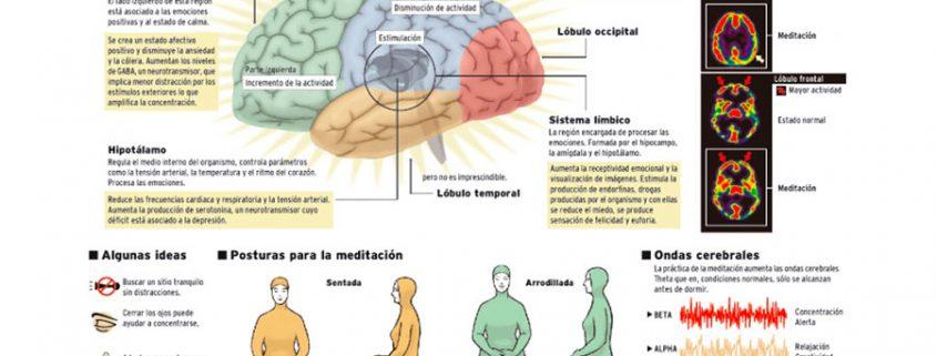 ocho semanas de meditacion bastan para cambiar el cerebro