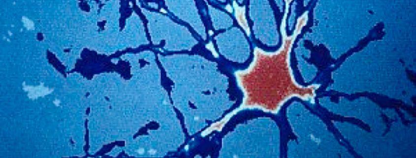 nuevas neuronas en el cerebro